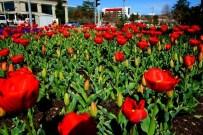 LALE SOĞANI - Malatya'yı Baştan Başa Çiçek Bürüyor