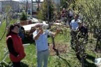 GÜNDÜZLER - Tepebaşı'nda Meyve Ağaçları Ve Üzüm Bağları Budandı
