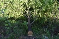YıLMAZ ŞIMŞEK - Kaymakam Şimşek Ağaç Kesimini Durdurdu