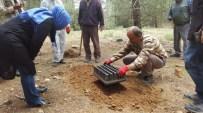 ÇAM KESE - Korkuteli Ormanlarına Terminatör Böcekler Salındı