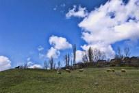 ULUABAT GÖLÜ - Uludağ'ın Yaylaları Turizme Açılıyor...