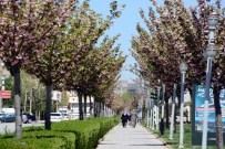 İSTANBUL YOLU - Konya'da Rengarenk Sakuralar Baharı Yaşatıyor