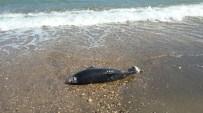 YUNUSLAR - Yunus Ve Buzağı Sahile Vurdu