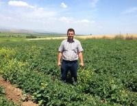 KUMKUYUCAK - Yerinden Fırlayan Tıpa Çiftçinin Sonu Oldu