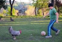 İBRAHIMOVIÇ - Futbol sihirbazı 'Horozoviç'