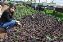 HERCAI - Silifke Belediyesi Yılda 150 Bin Çiçek Üretiyor