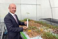 ORMAN BAKANLIĞI - Avrupa'da Kilosu Bin TL Olan Trüf Mantarı Denizli'de Suni Ortamda Üretilecek