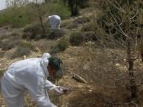ÇAM KESE - Orman Zararlılarıyla Biyolojik Mücadele