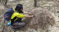 Kırmızı Karıncaların Yuvasına Elini Soktuğuna Pişman Oldu