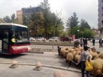 KEÇİ YAVRUSU - Koyun Sürüsü Trafiği Alt Üst Etti