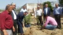 MUSTAFA BIRCAN - Aydın'da Zeytin Yetiştiriciliğinde İlk Damızlık Anaçlık Kuruldu