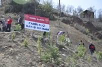TAHİR ELÇİ - Tunceli'de Tahir Elçi İçin Barış Ormanı