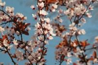HERCAI - Kırşehir Belediyesi Park, Refüj Ve Şehir Merkezini Çiçeklerle Donattı