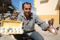 MAVİ YUMURTA - Bu Yumurtaların Tanesi 10 Lira