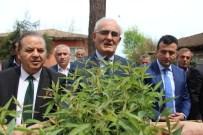 CANER YıLDıZ - Büyükşehir Belediyesi'nden 25 Bin Şeftali Anacı Dağıtımı