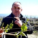 BİTKİSEL ÜRÜN - Manisa'da Tarım Sigortasına İlgi Arttı