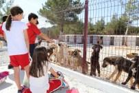 HAYVAN BAKIM EVİ - Öğrenciler Geçici Hayvan Bakım Evinde