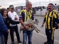 KEÇİ YAVRUSU - Bakırköy'de Kalabalığın Arasına Karışan Keçi Yavrusu İlgi Odağı Oldu