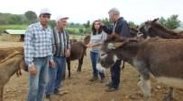 Sahipsiz Hayvanlara Alman Koruması