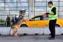 K-9 - K-9 Köpekleri, AŞTİ'nin Göz Bebeği Oldu