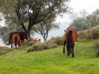 OKSİJEN KAYNAĞI - Spil Milli Parkı Projesi Manisa'yı Cazibe Merkezi Yapacak