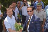 ERGUVAN AĞACI - Seydikemer'de 10 Bin Erguvan Dağıtıldı