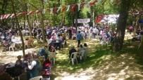 ERSIN EMIROĞLU - İzmit'in Aileleri Piknikte Bir Araya Geldi
