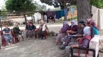 MUSTAFA BIRCAN - Aydın'da Kadın Çiftçi Eğitimleri Devam Ediyor