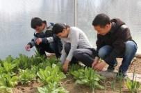 SEBZE ÜRETİMİ - Engelliler, Sera Ürünleri Yetiştiriyor