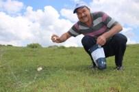 İBRAHIM ÇETIN - Seyitgazi'de Mantar Keyfi
