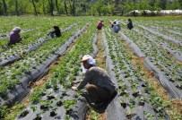 MUSTAFA BIRCAN - KKYDP Ekonomik Yatırımlar İçin Süre 3 Ekim'e Kadar Uzatıldı