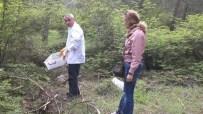 ÇAM KESE - Ormanları Yırtıcı Böcekler Koruyor