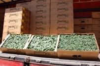 FAHRI KESKIN - Sivas İl Özel İdaresi'nden Çiftçilere Sebze Fidesi Desteği