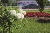 ÇAYKARA CADDESİ - Büyükşehir 1 Milyon Çiçek Dikiyor