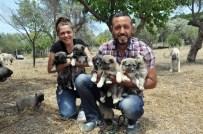 ÇOBAN KÖPEĞİ - İstanbul'dan Kaçıp İzmir'de Köpek Çiftliği Kurdular