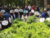 GÖRME ENGELLİ VATANDAŞ - Cemil MeriçDoğumunun 100'Üncü Yılında Mezarı Başında Anıldı