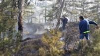 Çorum'da Orman Yangını