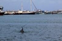 YUNUS BALIKLARI - Yunusları Köpek Balığı Sandılar