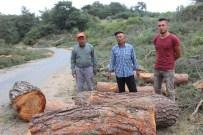 HÜSEYIN MUTLU - Aydın'da Orman Katliamı
