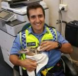 MASON - Kartalların Saldırdığı Yavru Kanguruyu Polis Kurtardı
