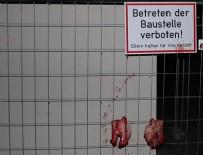İSLAMAFOBİ - Avusturya'da camiye 'domuzlu' saldırı