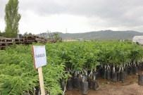 FAHRI KESKIN - Sivas'ta Çiftçilere Ceviz Fidanı Dağıtıldı