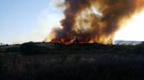 KEMAL KıZıLKAYA - Bayramiç'te Orman Yangını
