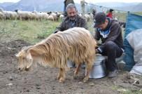 ÇAM SAKıZı - Tuncelili Çoban Mahir'in TEOG Başarısı