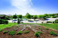 KOMPOZISYON - Kurumuş Ağaçlar Altınpark'ta Canlandı