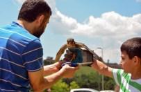YIRTICI KUŞ - Üniversitede Bakılan Doğan Doğaya Bırakıldı