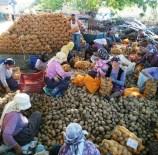 KAYMAKÇı - İzmir Büyükşehir Ödemiş'ten Patates Alımına Başladı