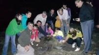 Yeşil Kaplumbağaların Yavrulama Süreci Başladı