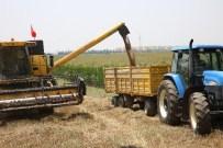 ÜNİVERSİTE KAMPÜSÜ - Çukurova'da Buğday Çiftçinin Yüzünü Güldürdü