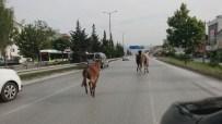 TEM OTOYOLU - İki at, bir eşek şehri birbirine kattı